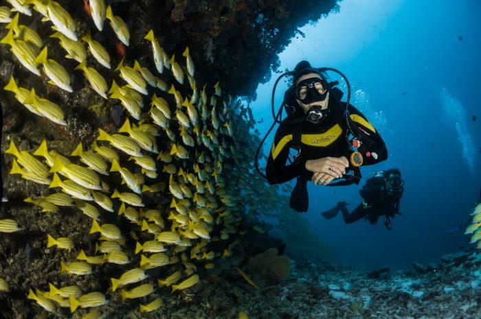 Sådan kommer du i gang med dykning